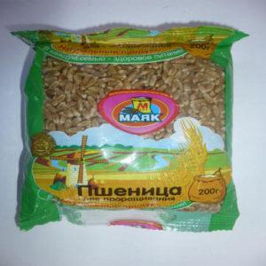 Hạt lúa mỳ nảy mầm, 200 gr.